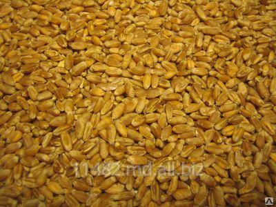 Заказать Производство, сбор , переработка и реализация подсолнечника, кукурузы, пшеницы фуражной.