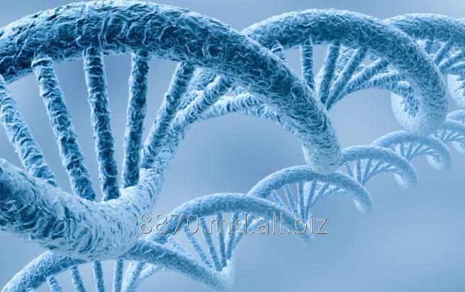 Заказать Анализ Качественное определение ДНК Human papillomavirus 16,31,35; 33,52,58; 18,39,45,59