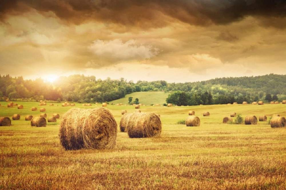 Заказать Услуги сельскохозяйственные - культивация, обработка почвы, орошение, чистка озер и водоемов