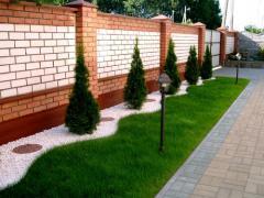 Газоны рулонные, газоны луговые, газоны спортивные, дизайн сада,