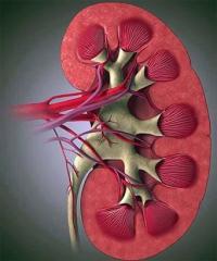 Treatment of an urolithic illness