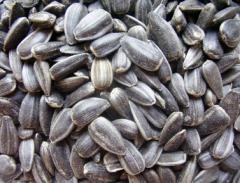 Achizitionare de seminte de floarea-soarelui
