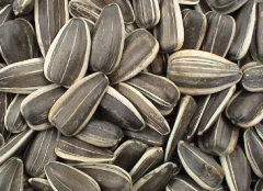 Servicii de aprovizionare semintelor