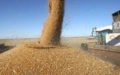 Crestere de cereale