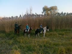 Horse walks in Moldova