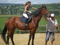 Services are horse-racing, equestrian spor