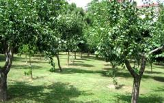 Design fruit orchards, consulting services