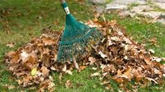 Cleaning of a garden, cleaning of territories
