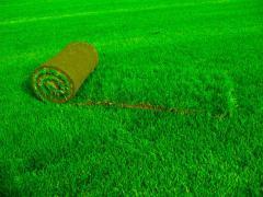 Реставрация газонов