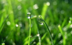 Снабжение газонов воздухом