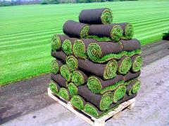 Cultivation of rolled lawns in Moldova