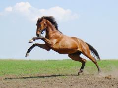 Vânzare de cai de reproducţie