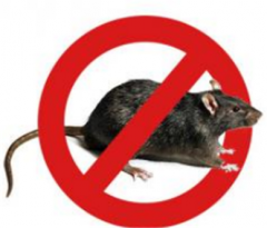 Processing of warehouse from rodents