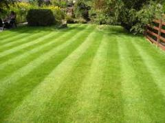 Top dressing of lawns