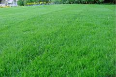 Выравнивание краев газона