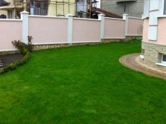 Weeding of a lawn