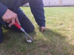 Weeding of a lawn manually
