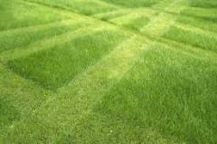 Подбор семян трав для газонов