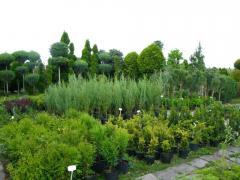 Landing of a garden Chisina
