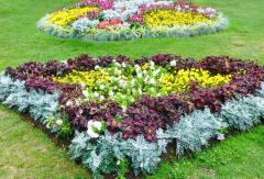 Care of flower beds in Moldova