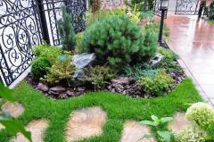 Design, landing of flower beds