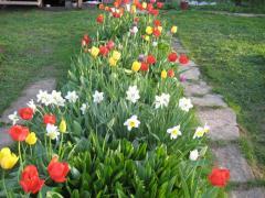 Подкормка цветников