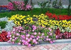 Высадка однолетних цветов