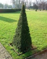 Обрезка и  формировка декоративных деревьев