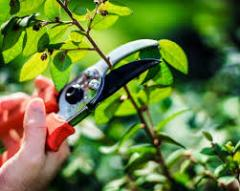 Sanitary cutting of trees