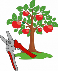 The rejuvenating cutting of fruit trees