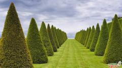 Cutting of kolonovidny trees