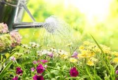 Watering of a garden