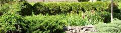 Стрижка кустов и газонов
