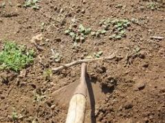 Подготовка почвы для посадки сада