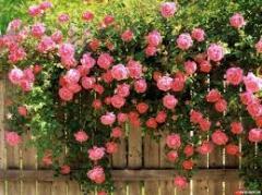 Устройство розария и сирингария