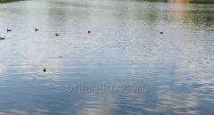 Продается озеро 5га, Орхей, Крихана