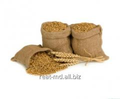 Закупка зерна