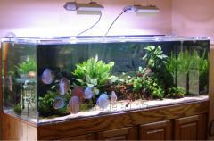 Изготовление аквариумов.