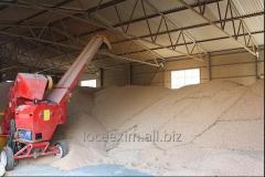 Услуги складские для зерновых культур (Depozitarea cerealelor)