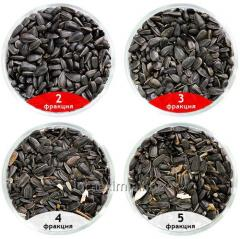 Calibration of sunflower seeds