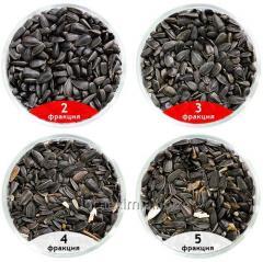 Калибровка семян подсолнечника (Servicii de calibrare a semintelor de folarea soarelui)