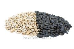 Purification of sunflower seeds