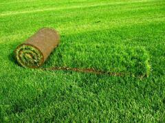 Stacking of rolled lawns