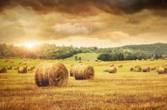 Услуги сельскохозяйственные - культивация, обработка почвы, орошение, чистка озер и водоемов