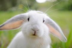 Выращивание кроликов в Молдове