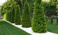 Стрижка живых изгородей, деревьев и кустарников