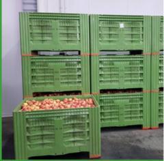 Экспорт фруктов в ЕС и СНГ