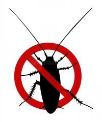 Уничтожение тараканов / Exterminarea gândacilor