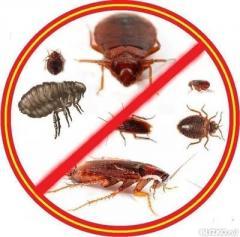 Обработка от насекомых / Servicii profesionale de eliminare a insectelor