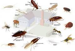 Избавление от насекомых / Servicii profesionale de eliminare a insectelor